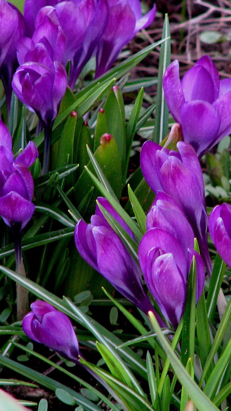 15 Best Purple Flower Images On Pinterest Beautiful Flowers