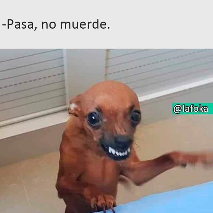 Pasa No Muerde Memes Perros Memes Divertidos Memes Comicos