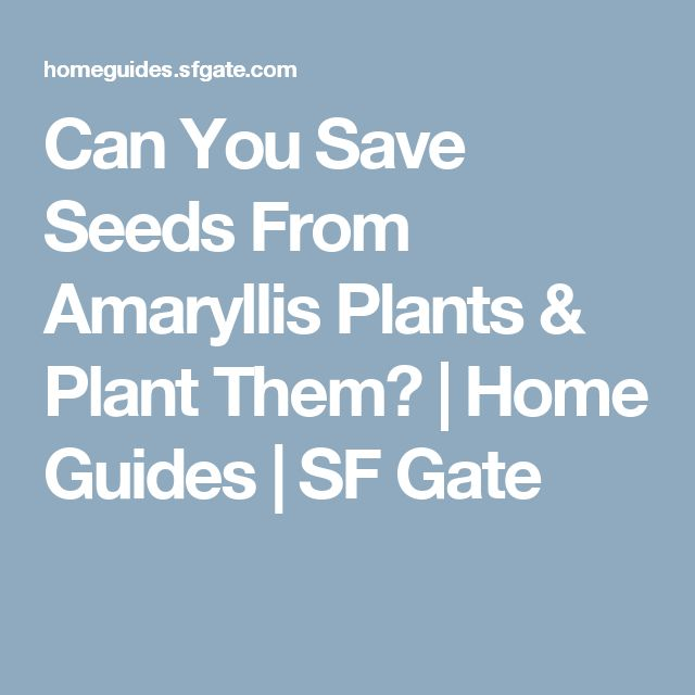 Can You Save Seeds From Amaryllis Plants & Plant Them? | Home Guides | SF Gate