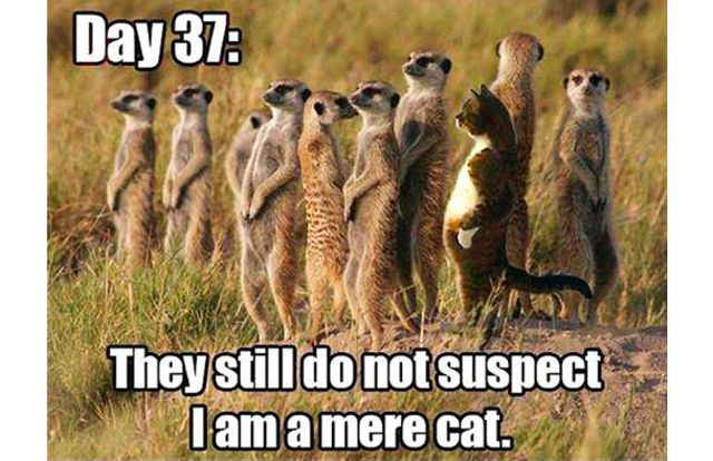 You Can Haz Memes? 31 Hilarious Cat Memes From Around The Internet (Slide #96) - Pawsome