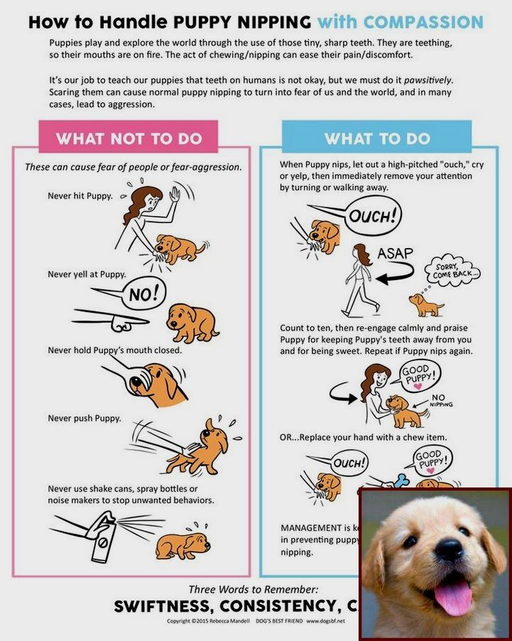 1 Have Dog Behavior Problems Learn About House Training A Puppy At Night And Dog Training Classes Lex Dog Training Dog Clicker Training Positive Dog Training