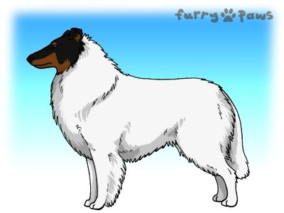 Furry Paws // UCH Kip's Galaxy DYI [1.618] *BoB*'s Kennel