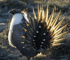 Greater Sage Grouse. (At Risk) Global warming threatens the birds we love, including the Barn Owl But if we band together, we can build a brighter future for birds and ourselves. Take action today by spreading the word.