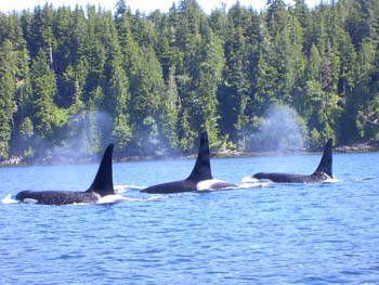British Columbia Canada Desolation Sound Marine Park