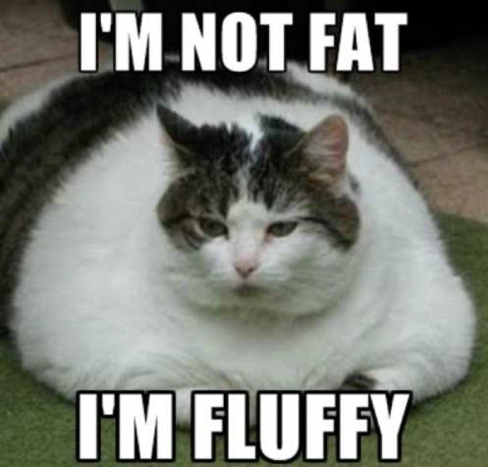 Not Funny Cat Meme : Images about its so funny on pinterest fluffy cat