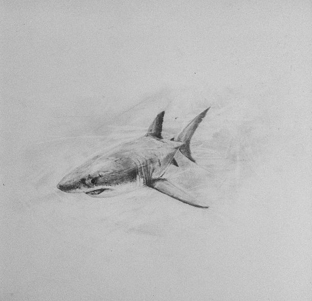 #shark #sea #draw #draws #drawing #drawings #drawingpainting #worldwildlife #worldwildlifefund #paintings #pencildraw #pencil #art #arts #sketch #drawingpainting