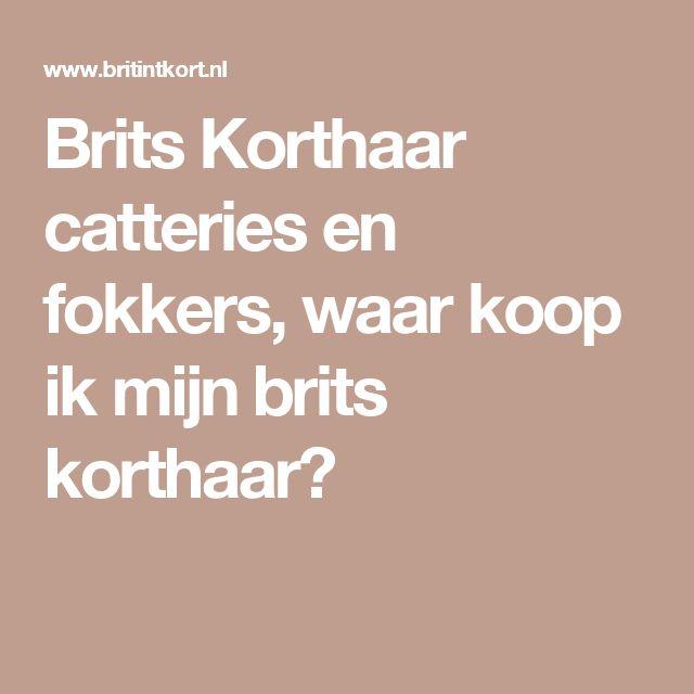 Brits Korthaar catteries en fokkers, waar koop ik mijn brits korthaar?