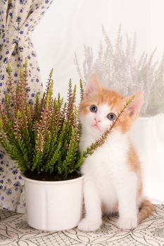 Cat Friendly Houseplants - long list, and also list of poisonous/harmful plants