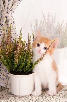 An A-Z List of Cat Friendly Plants ✿⊱ ᎷᎯᏒᎥᏖᏕᎯ'Ꮥ ᎶᎯᏒᎠᎬN ⊰✿