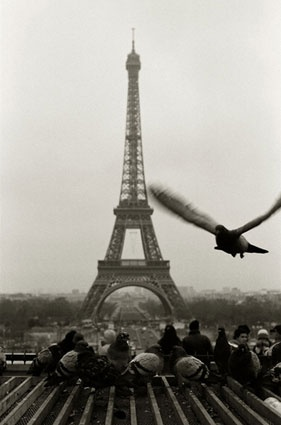 Andrew Ward - Eiffel Tower: Ward Photography