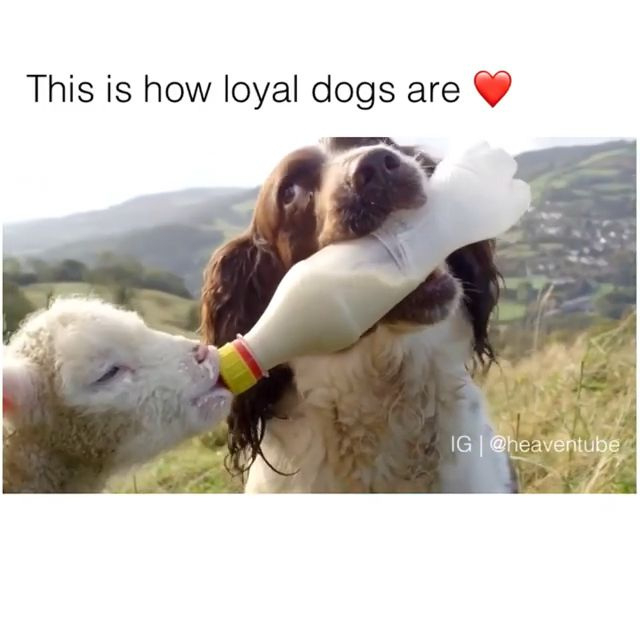 Compilation Of Loyal Canine ❤️♥️