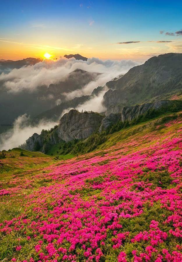 #mountain #wildflowers #nature