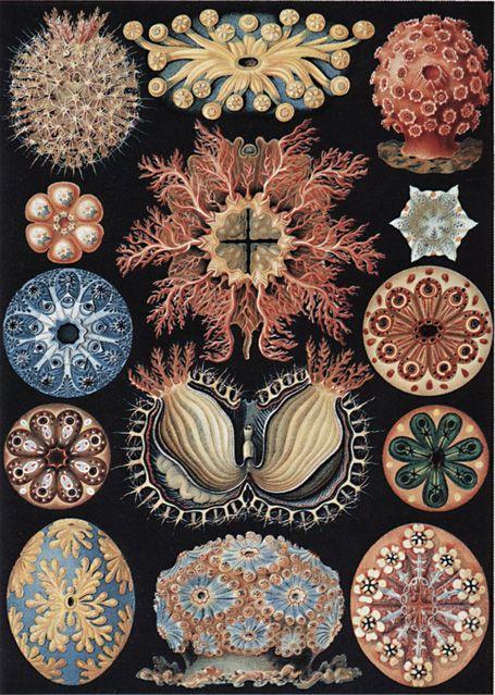 Ernst Haekel est un des meilleurs biologistes du XXe siècle spécialisé dans l'étude des organismes sous-marins. En 1859-60 il commence à étudier de minuscules organismes, les radiolaria. Il  reconnaît leur beauté et leur utilisation dans le domaine du dessin décoratif. Il en fait des dessins avec l'aide d'un microscope. Son livre Kunstformen der Natur paraît en 1899-1904.