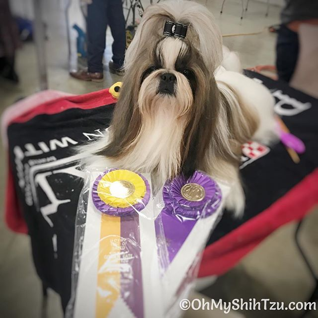 Wow Such A Crazy Weekend At The Harvest Moon Classic Dog Show On