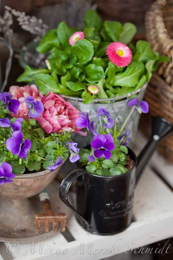 106 best in pots images on pinterest container garden flowers and blomsterverkstad livet med trdgrd uterum och vxter spring on my balcony mightylinksfo Image collections