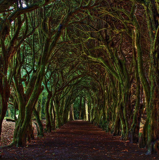Tree Tunnel,  County Meath, Dublin, IrelandBuckets Lists, Favorite Places, Ireland Photos, Trees Tunnel, County Meath, Dublin Ireland, Beautiful Places, Magic Places, Tree Tunnel