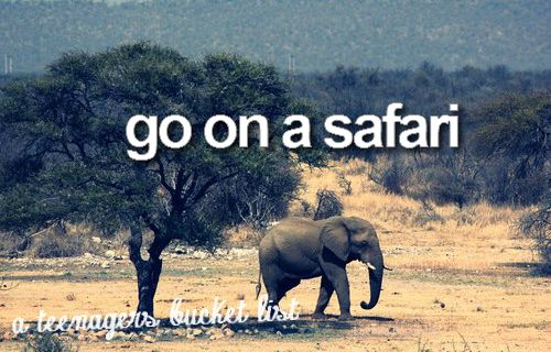 : Dreams, Animal Kingdom, Africans Safari, Elephant, South Africa, Before I Die, Disney, The Buckets Lists, My Buckets Lists