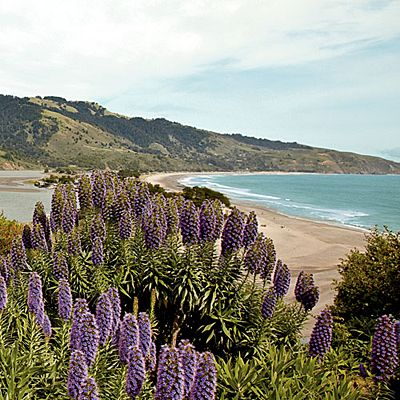 There aren't many communities west of the infamous San Andreas Fault north of San Francisco, but the town of Bolinas, California, is one of them. It's actually located on a completely different tectonic plate from the rest of the state; even the vegetatio