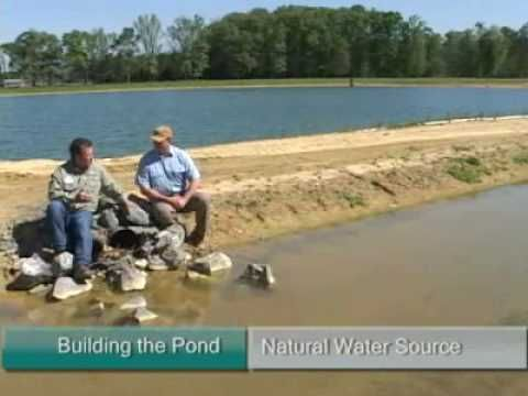 1000 images about farm pond care on pinterest for Bass pond construction