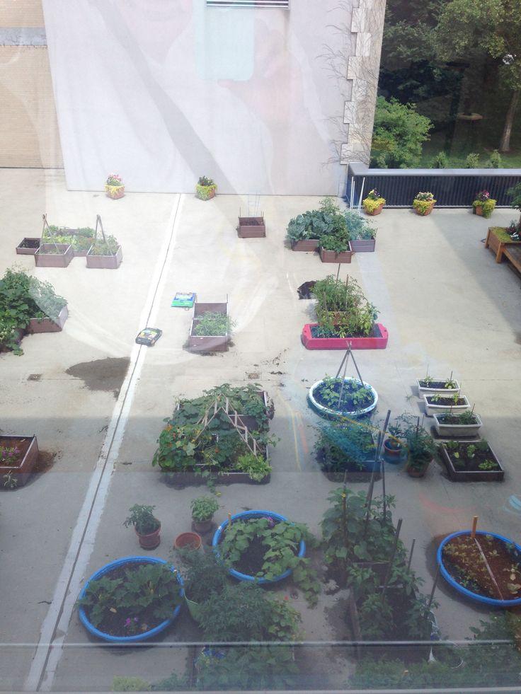 232 best images about urban garden