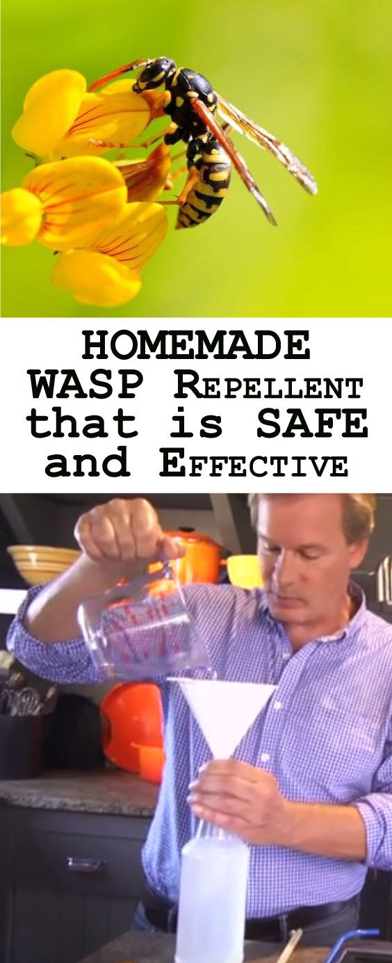 With spring comes many wonderful things – sunlight, flowers, vegetable gardens. Unfortunately, spring also brings out wasps and even if you aren't deathly allergic to those little stingers, they can be very painful. Here is a recipe for a Homemade Wasp Repellent That is Safe and Effective