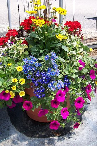 280 best patio containers images on pinterest flowers pots and pretty flower planter with petunias lobelia geraniums to name a few mightylinksfo