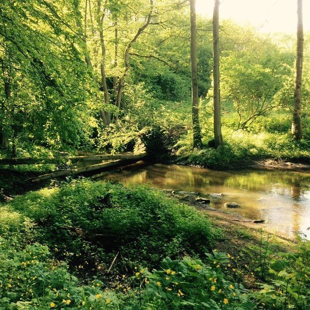 Przerażony? Piątkowe popołudnie (tym bardziej w #piątek13) to najlepszy czas aby wybrać się na spacer. Las, świeże powietrze, chwila relaksu po ciężkim tygodniu na uczelni... Bierz futrzaka, przyjaciela, czy drugą połówkę i zachwycaj się piękną złotą jesienią, póki masz okazję! #spacer #las #widoczki #relaks #drzewo #krzaczek #liście #jesień #rusztylek #wyluzuj #student