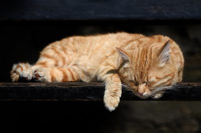 Ginger cat sleeping image by Edijs Palens from Fotolia.com