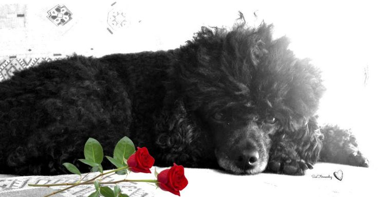 My love Toby <3