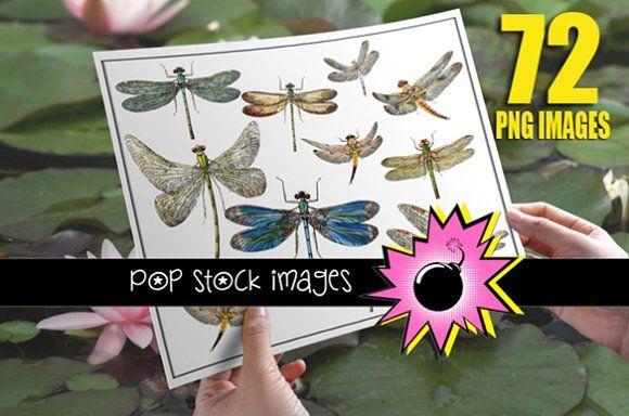 Vintage Dragonfly Digital Image Set by popstock on @creativemarket