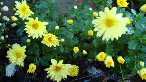 165 best consejos para la decoraci n de interiores y for Arboles de sombra para jardin