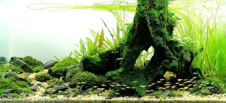 Aquascape Awards Planted Tank: Ordinary Course of Nature by Jirawong Laopiyasakul