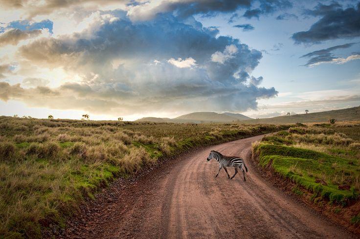 #ViewThe Roads, Favorite Places, Travel Photos, Places I D, Tanzania, Sam Gellman, Dirt Roads, Zebras Crosses, Vacations Travel