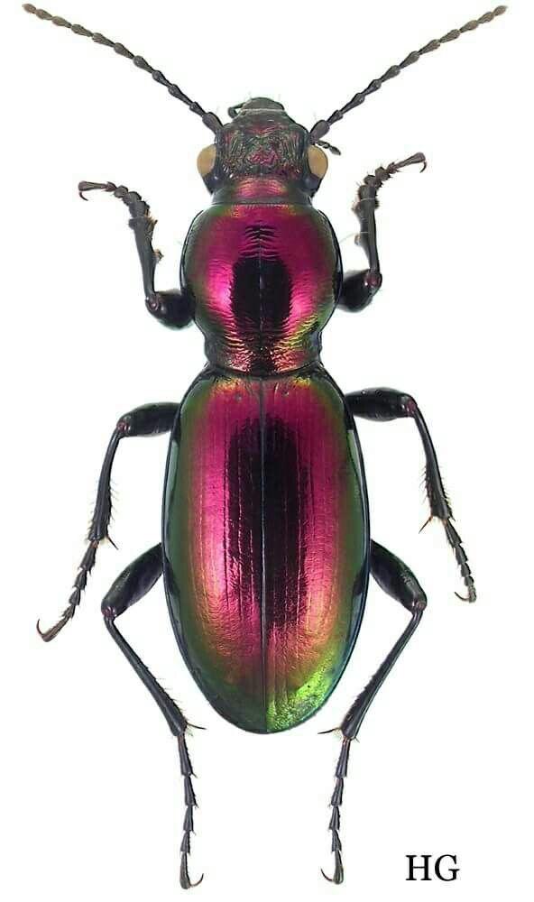 #beetle ~ETS