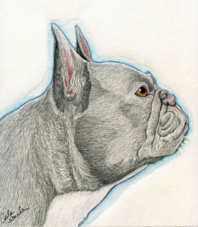 french bulldog dog pet art original drawing 8 x 9 inches