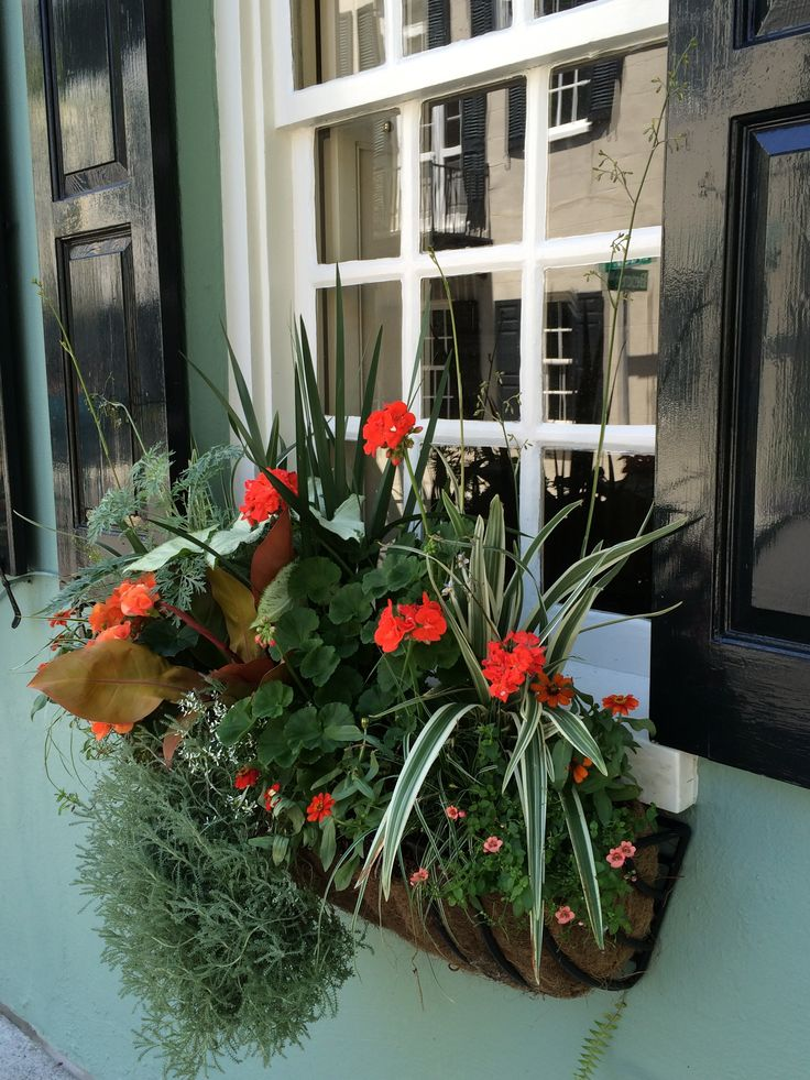 17 Best Images About Charleston Window Boxes On Pinterest