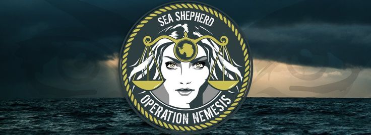 Latest news from Sea Shepards defence campaign in Australias whale sanctuary