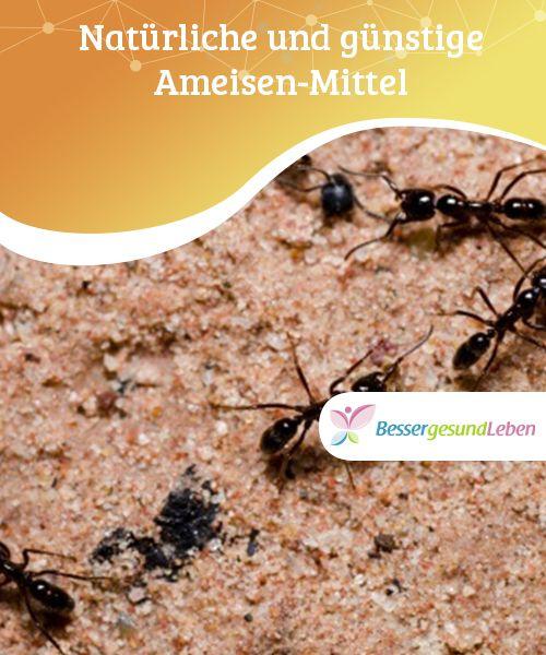 Die besten 25+ Mittel gegen ameisen Ideen auf Pinterest Ameisen - ameisen in der k che was tun