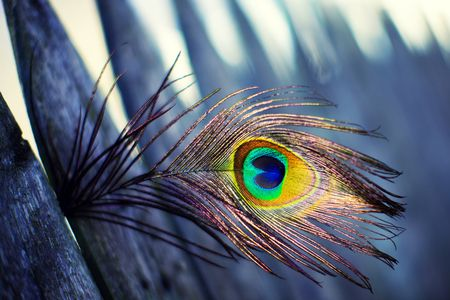 Peacock feather photography abstract background wallpapers on tattoo ideas pinterest - Beautiful peacock feather ...