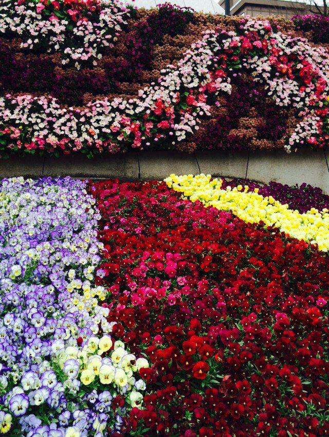 Fresh flowers - in bloom