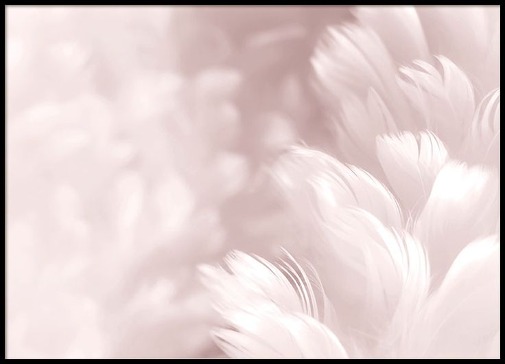 Stylish photo print in pink with feathers. www.desenio.com