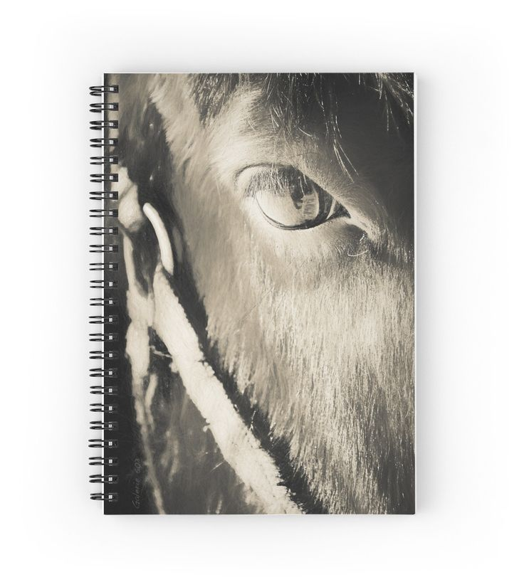 Horse Eye / L'oeil du cheval by Galerie 503