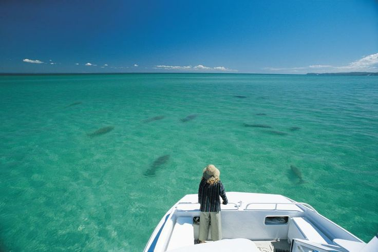 Dugongs in Morton Bay near Brisbane Queensland Australia #Australia #Dugong Australian Discount Club support Dugongs http://www.kangadiscounts.com