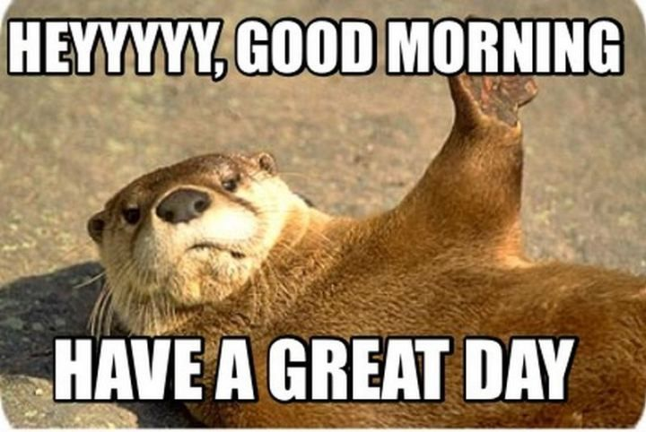 101 Have A Great Day Memes To Wish Someone Special A Good Day Good Day Quotes Cute Good Morning Pictures Morning Quotes Funny