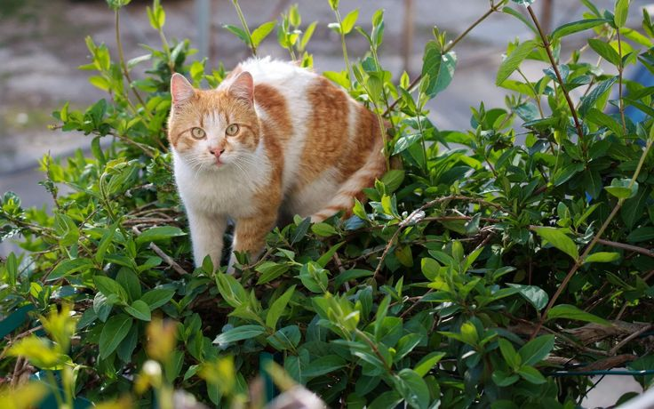 Keeping Cats Safe Plants and Cats Katzenworld in 2020