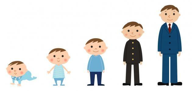 تطور نمو الطفل Vault Boy Character Family Guy