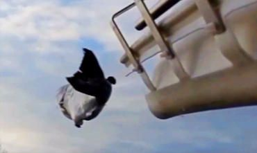 An ingenious solution to problems with fish migration: the salmon cannon.
