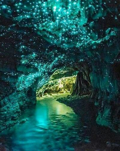 (private rp) Rose led Kid to a beautiful cave which looked like stars were growing from the roof.