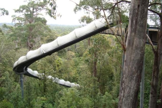 Go down a slide in the forest at Dismal Swamp - Tasmania