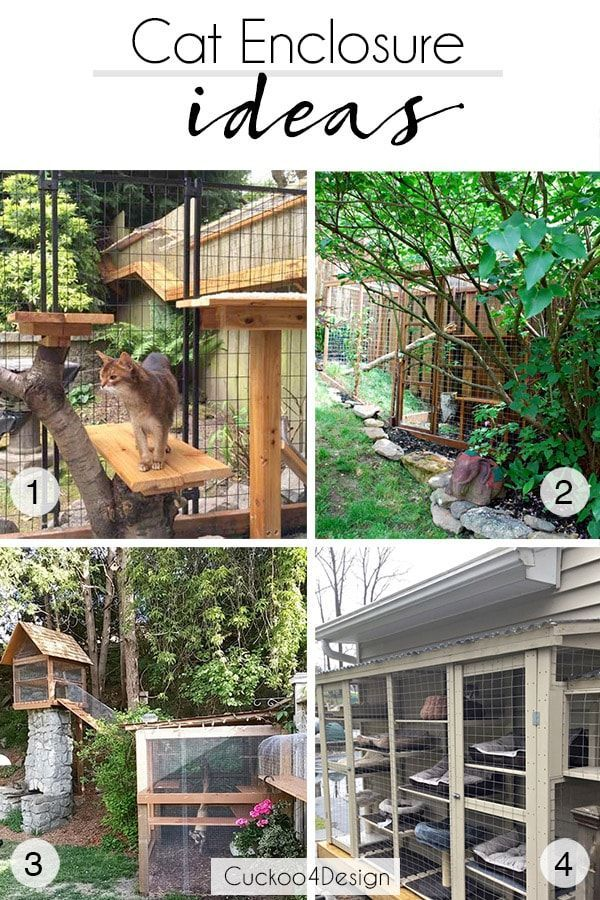 Cat Outside Tunnel Off 60, Outdoor Cat Kennel Ideas